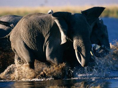 elephants eau