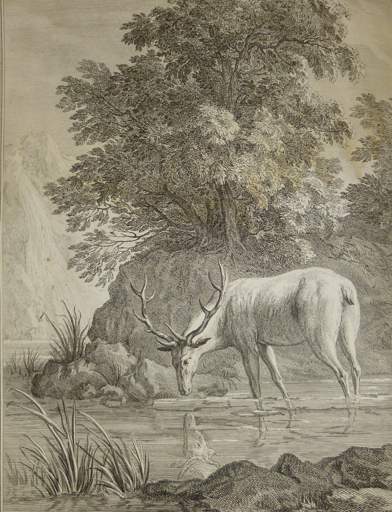 cerf d'oudry