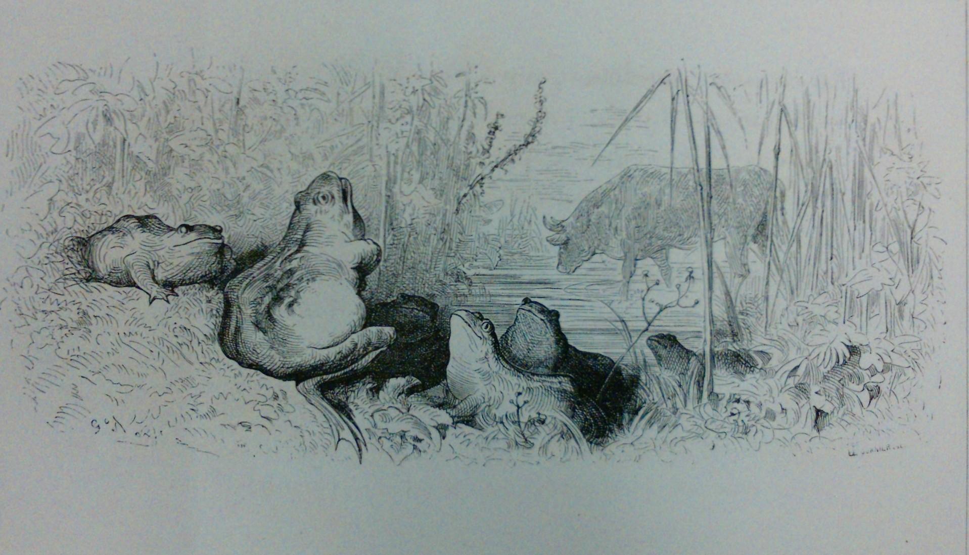 La grenouille et le boeuf dom e mots - Image la grenouille et le boeuf ...