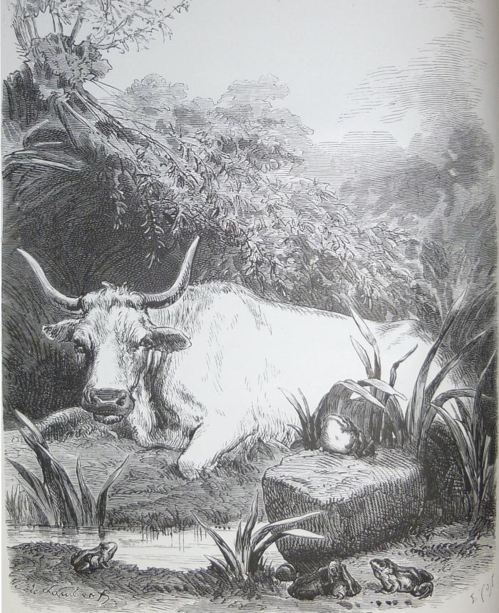 GRENOUILLE LAMBERT