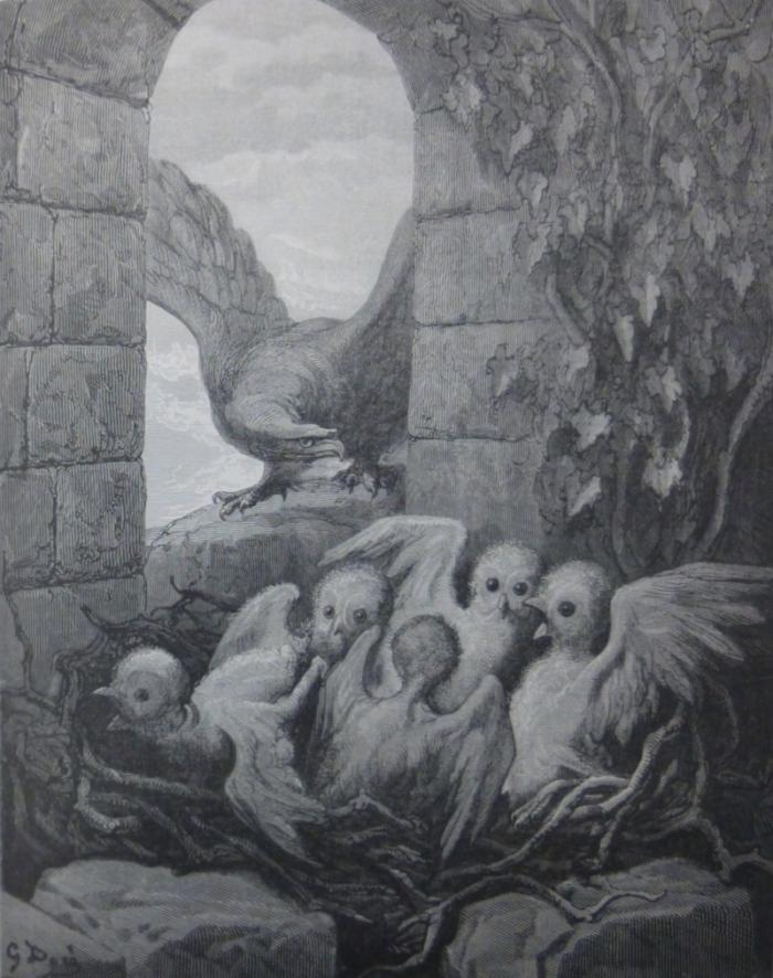AIGLE HIBOU 2